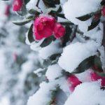 大雪( `ー´)ノ